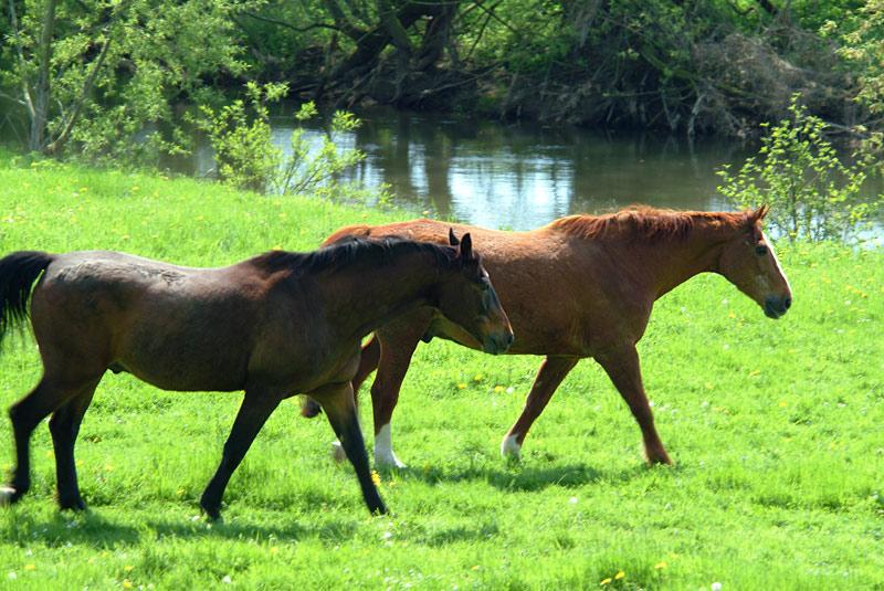 wer kennt diese zwei pferde