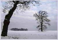 Beberbeck bäume fc