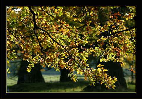 http://www.mara-thoene.de/assets/images/autogen/a_Goldener_Oktober.jpg